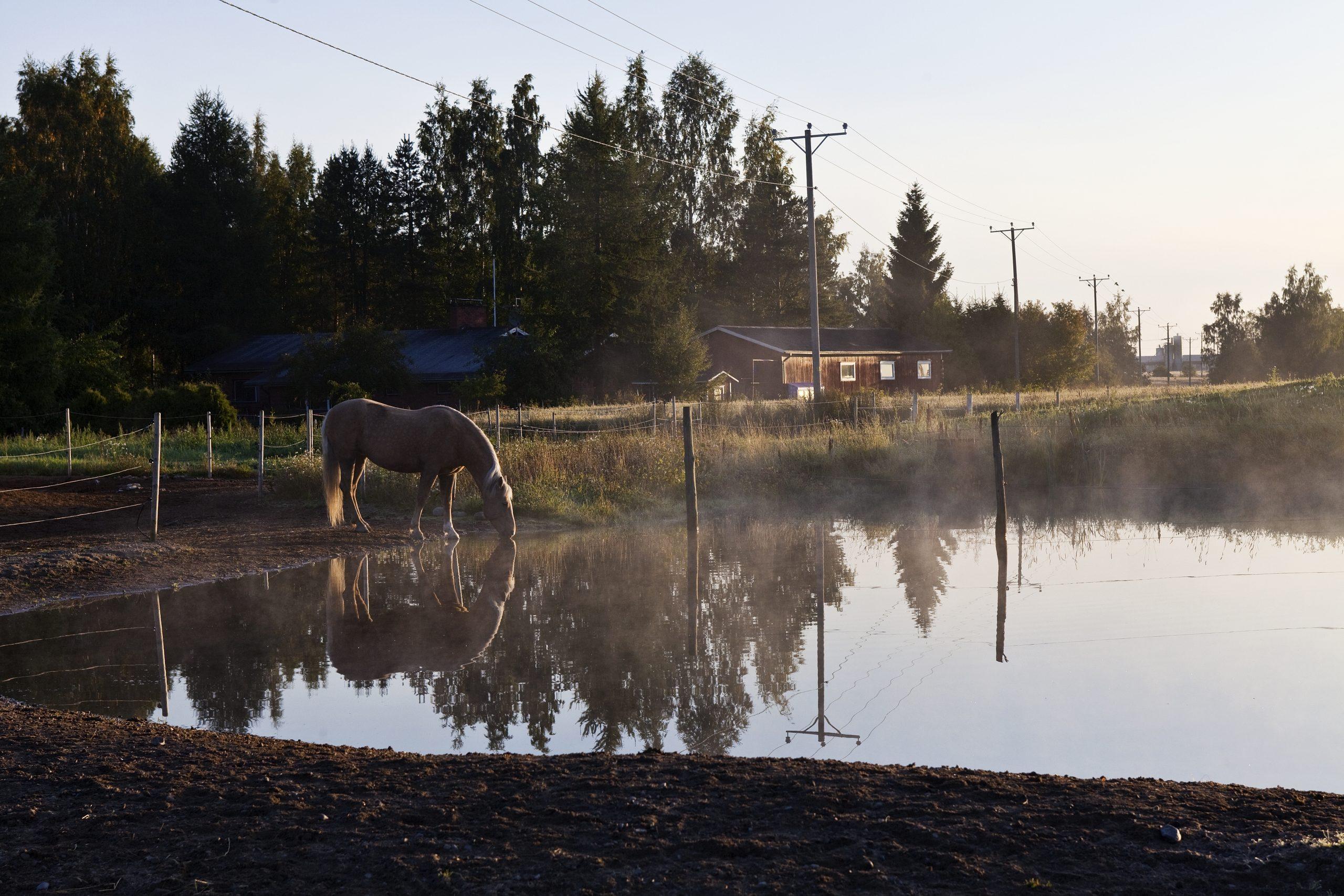 Hevonen laiduntamassa lammen äärellä ulkona