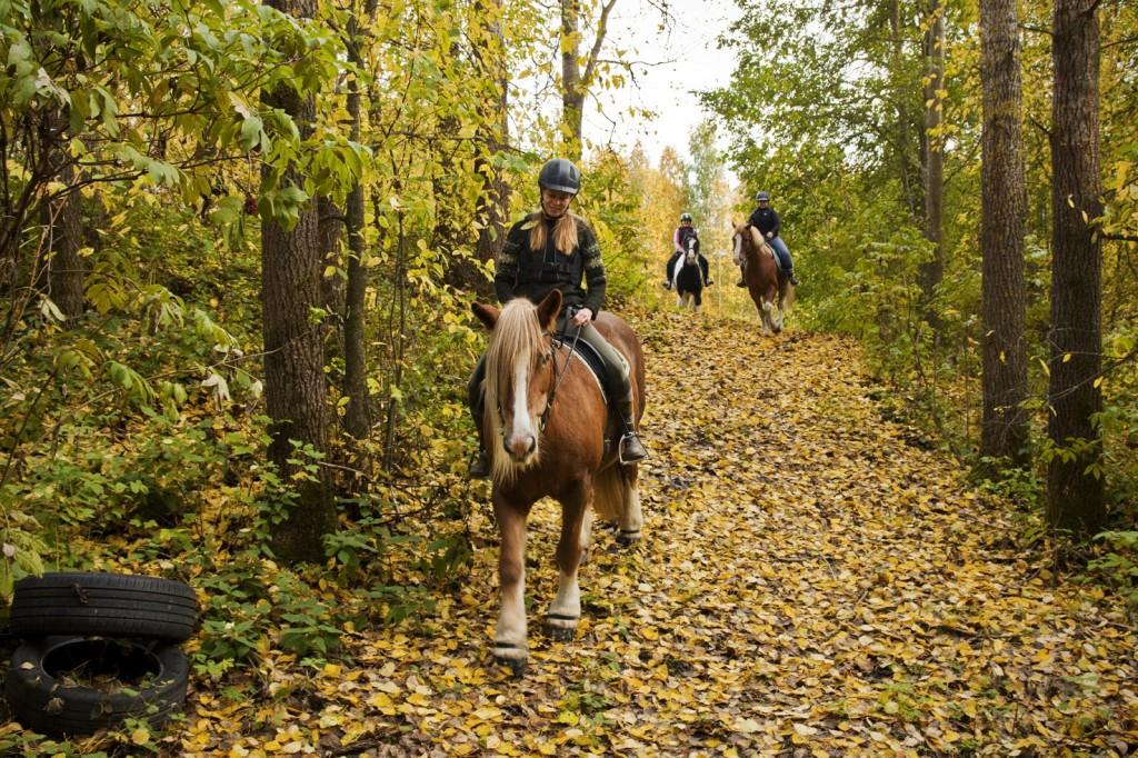 Tallimme hevoset maastossa ratsastajien kanssa